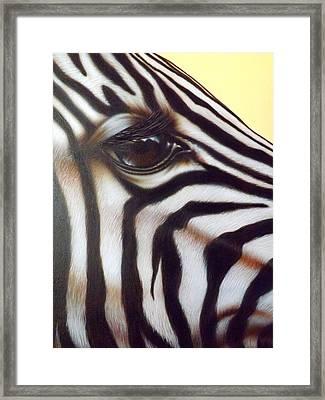 Eye Of The Zebra Framed Print by Darren Robinson