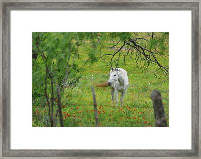 Eye On Beauty Framed Print