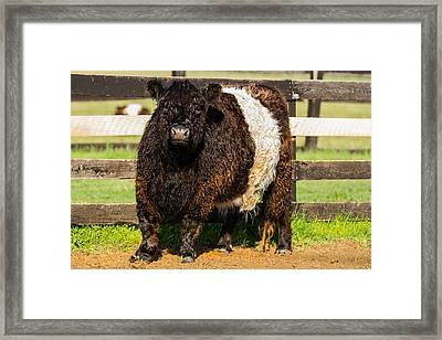 Keeping An Eye On You Framed Print by Earl Ball