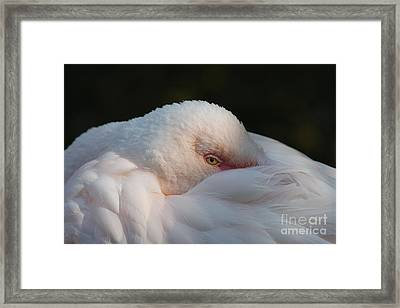 Eye On You Framed Print by Judy Whitton