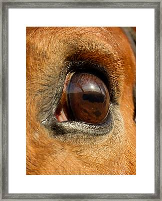 Eye Framed Print by Paulina Szajek
