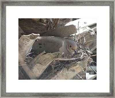 Eye See You Framed Print by Deborah DeLaBarre