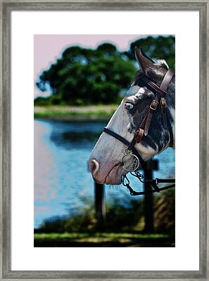 Eye See You Framed Print by Frank Feliciano
