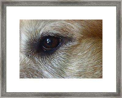 Eye See You Framed Print by Lisa Phillips
