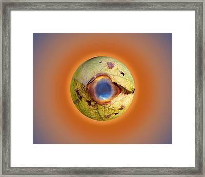 Eye See You Framed Print