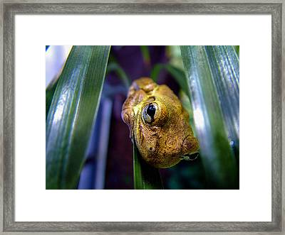 Eye See You Framed Print by Zachary Cox