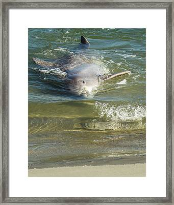 Framed Print featuring the photograph Eye Spy by Patricia Schaefer