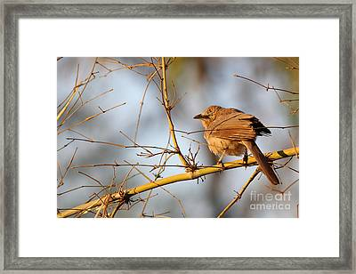 Eye To Eye Framed Print by Vishakha Bhagat