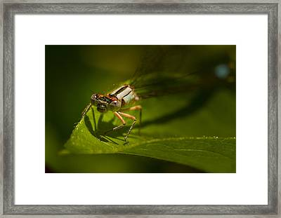 Eye To Eye With The Damsel Fly Framed Print by Jean Noren