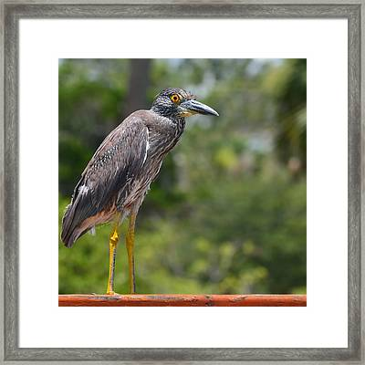 Framed Print featuring the photograph Eye To Lens by DigiArt Diaries by Vicky B Fuller