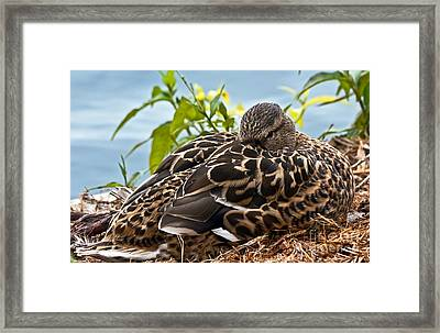 Framed Print featuring the photograph Eye Watching You by Kate Brown
