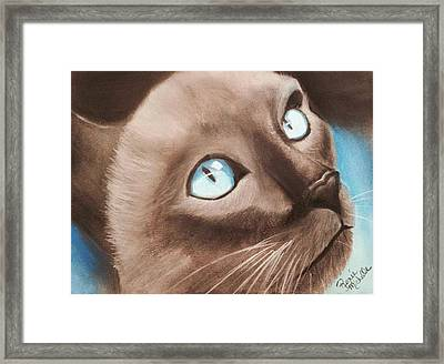 Eyeing The Canary Framed Print