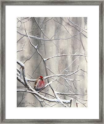 Eyeing The Feeder Alaskan Redpoll In Winter Framed Print