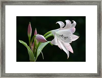 Eyelash Lily Framed Print