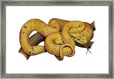 Eyelash Viper, Illustration Framed Print