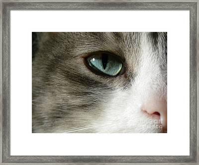 Eyes 2 Framed Print by Laura Yamada
