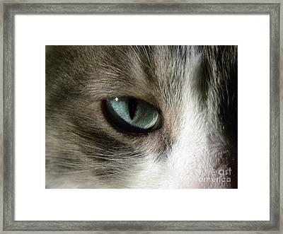 Eyes 3 Framed Print by Laura Yamada