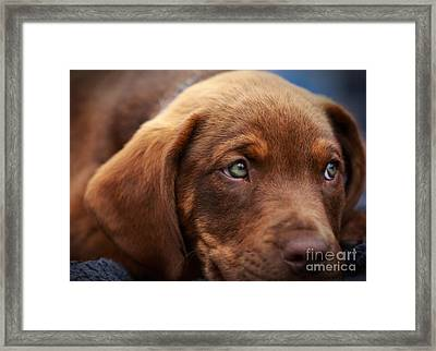 Eyes Are The Window To The Soul Framed Print