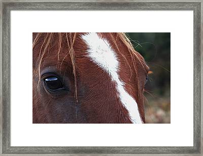 Eyes Are The Windows To The Soul Framed Print