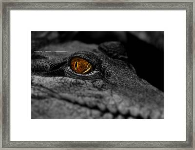 Eyes For You Framed Print by Andrew Prince