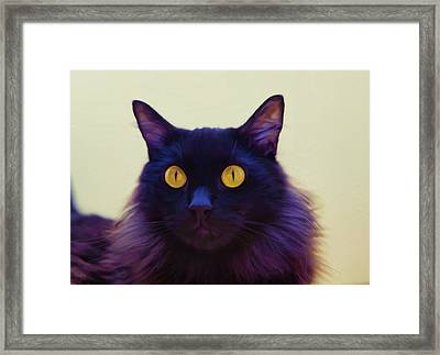 Eyes Framed Print by Hazel Billingsley