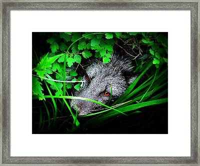 Eyes In The Bushes Framed Print