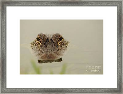 Eyes Framed Print by Lynda Dawson-Youngclaus