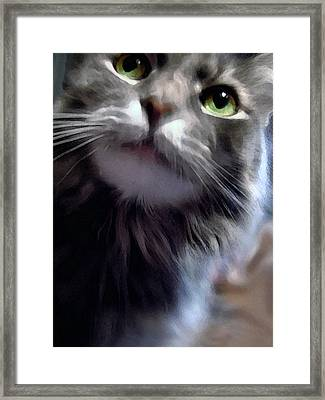 Eyes Nose Mouth Whiskers Framed Print