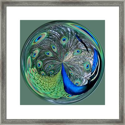 Eyes Of A Peacock Framed Print by Cynthia Guinn