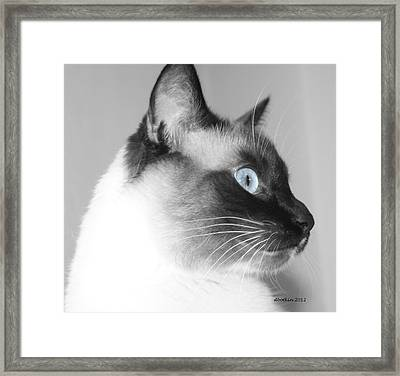 Eyes Of Blue Framed Print by Dick Botkin