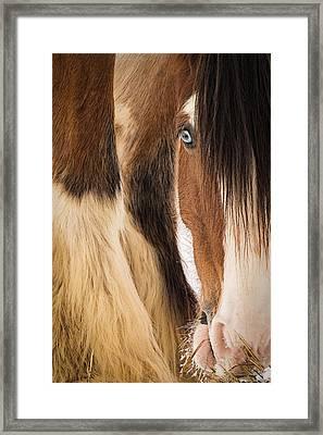 Eyes Of Blue Framed Print by Everet Regal