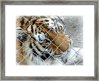Eyes Of Captivity Framed Print by Heidi Manly