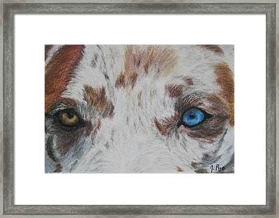 Eyes Of Catahoula Framed Print