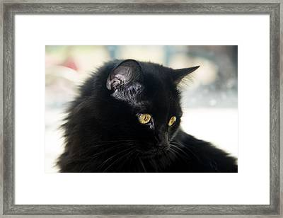 Eyes Of Gold Framed Print by Camille Lopez