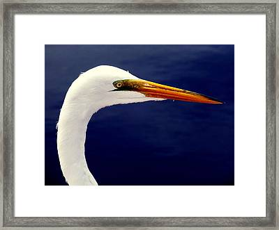 Eyes Of Steel Framed Print