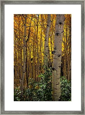 Framed Print featuring the photograph Eyes Of The Forest by Ken Smith