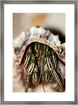 Eyes Of The Hermit Framed Print