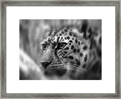 Eyes Of The Leopard Framed Print