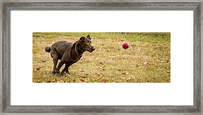 Eyes On The Ball Framed Print by Jean Noren