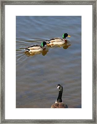 Eyes On The Green Framed Print