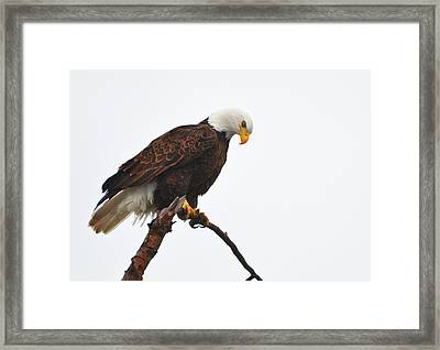Eyes On The Prize Framed Print by Annie Pflueger