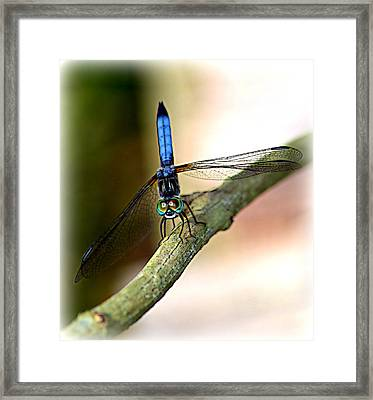 Eyes On You Dragonfly Framed Print by Sheri McLeroy