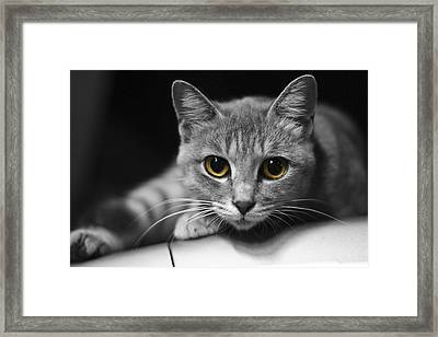 Framed Print featuring the photograph Eyes Open Wide by JianGang Wang