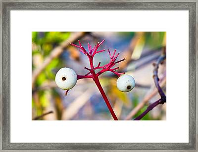 Eyes? Framed Print