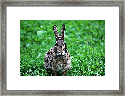 Framed Print featuring the photograph Eyes Wide Open by Trina  Ansel