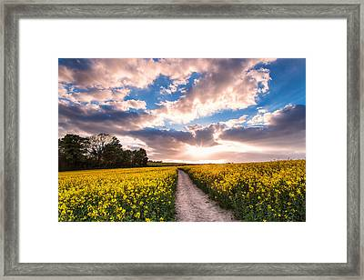 Eynsford Fields Framed Print