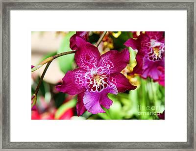 Fabulous Fushia Orchids By Diana Sainz Framed Print