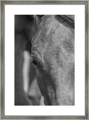 Face Me Framed Print by Lezlie Faunce