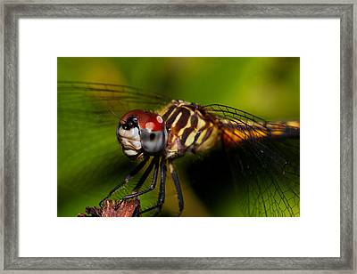Face Of The Dragon Framed Print by Mike Farslow