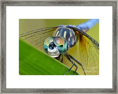 Face Of The Dragonfly Framed Print by Kathy Baccari